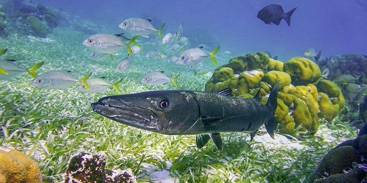 Belize Barrier Reef fisheries